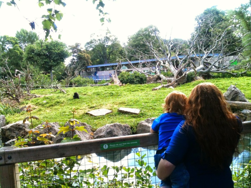 Then we saw some monkeys.