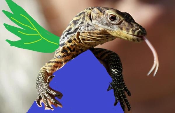 komodo-dragon