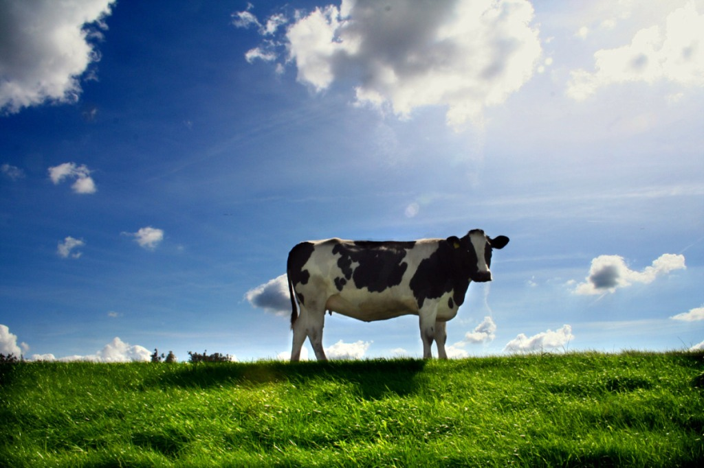 cow-field-animal-farm-grass-sky-free_312928