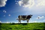 cow-field-animal-farm-grass-sky-free_312928